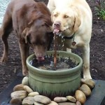 Backyard Water Features for Dogs