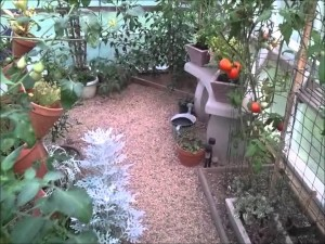 DIY Greenhouse Misting Systems