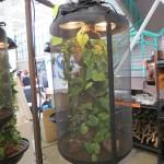 DIY Misting System Chameleon