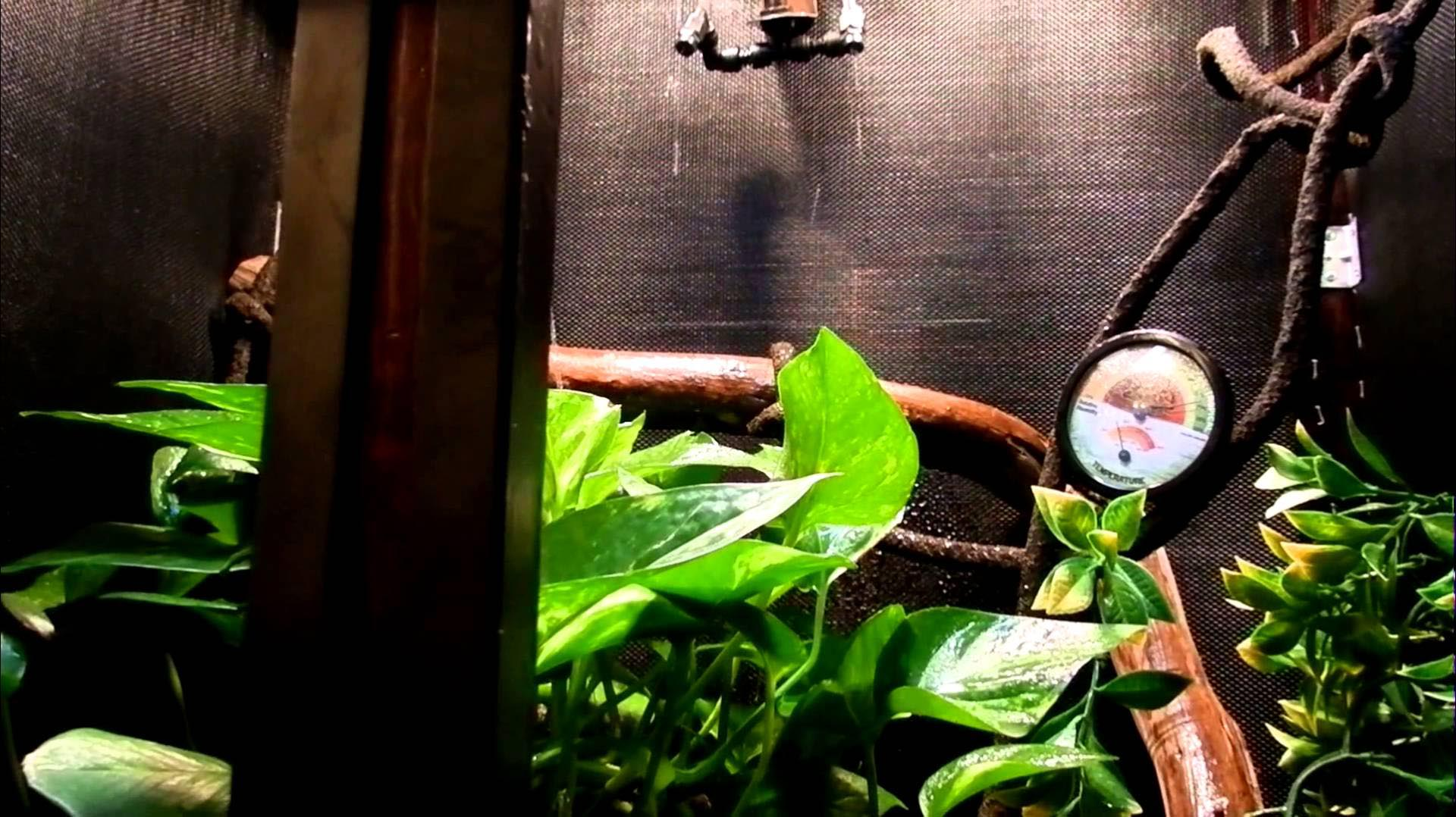 DIY Misting System for Terrarium