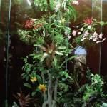 DIY Terrarium Misting System