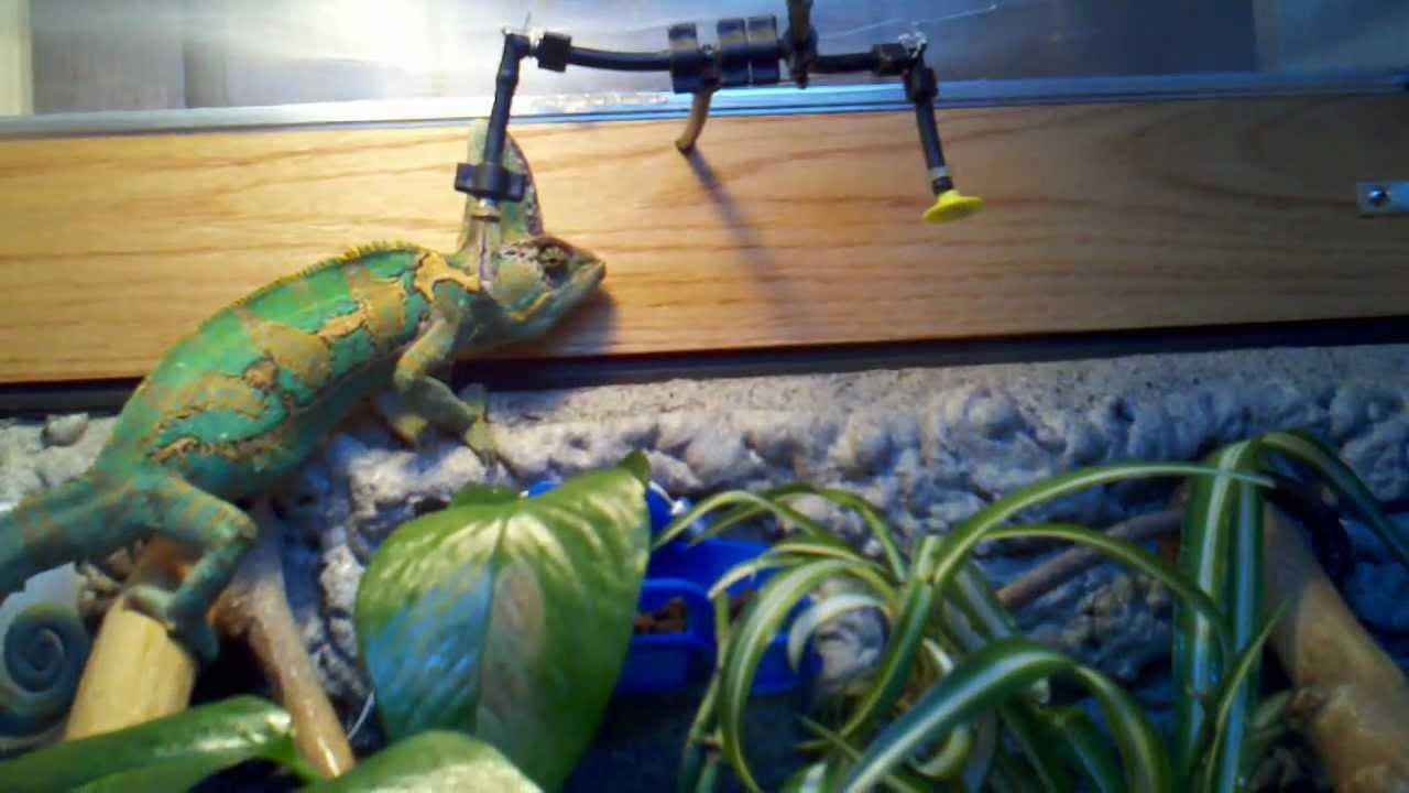 DIY Vivarium Misting System