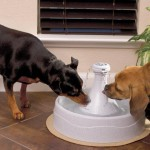 Dog Drinking Fountain Reviews