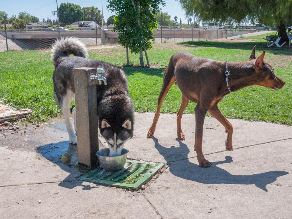 Dog Drinking Fountains for Parks