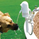 Dog Drinking Water Fountain