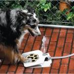 Dog Fountain Outdoor