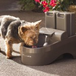 Dog Outdoor Drinking Fountain