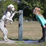 Dog Water Drinking Fountain