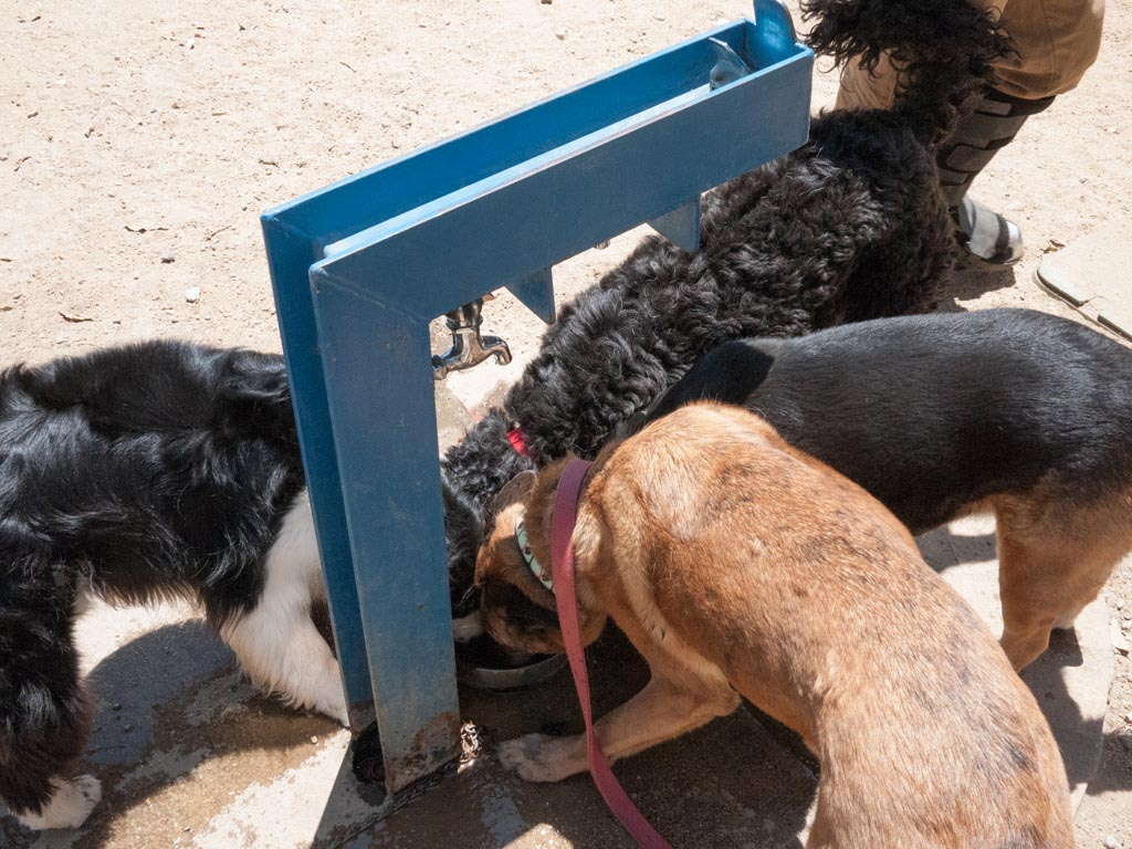 Dogs Drinking Water Fountains