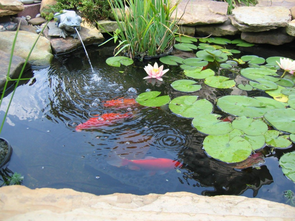 Fish Pond Fountain