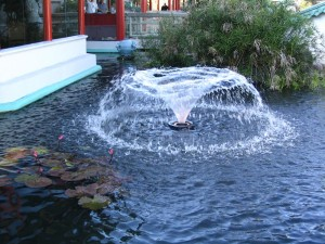 Floating Fountain for Pond