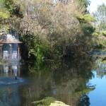 Fountain Gardens Tauranga