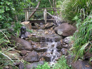 Images of Backyard Water Features