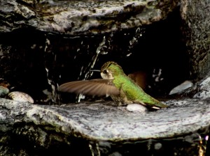 Misting Fountain for Hummingbirds