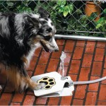 Outdoor Dog Drinking Fountain