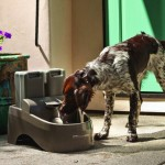 Outdoor Dog Drinking Fountains