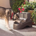 Outdoor Drinking Fountain for Dogs