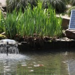 Solar Pond Fountain Kit